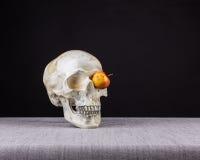 嗅到和观看与一个的头骨注视苹果 库存图片