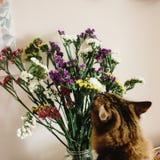 嗅到在花瓶的猫五颜六色的惊人的野花在背景 库存照片