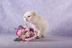 嗅到花的大白色猫 免版税图库摄影