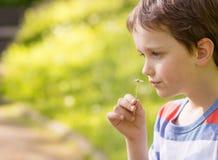 嗅到雏菊的甜小男孩 库存照片