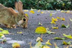 嗅地面的一个逗人喜爱的小的兔宝宝 免版税库存图片