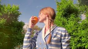 嗅橙色果子的少妇在柑橘果树园 橙色果树在庭院里 股票录像