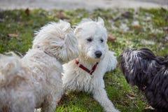 嗅的三条狗在公园 库存照片