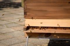 嗡嗡叫在木箱子蜂房之外的蜂 图库摄影