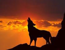 嗥叫在日落的狼 免版税库存图片