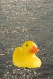 嗨鸭子 免版税库存照片