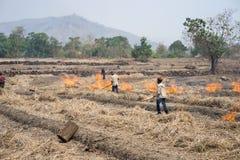 嘉莱,越南- 2017年3月12日:与用干燥米秸杆做的火的乡下领域在嘉莱,越南的高原中心 库存照片