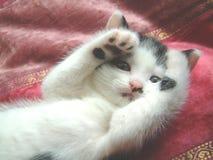 嘘小猫偷看 库存图片