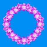 嘲笑从在蓝色背景隔绝的野生大竺葵花的圆的花卉框架 免版税库存图片