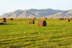嘿在哈卡斯共和国农田滚动  免版税库存图片
