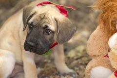 噘嘴的哀伤的逗人喜爱的小狗户外 免版税图库摄影