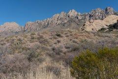 器官山在新墨西哥 免版税库存图片
