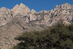 器官山在西南新墨西哥 库存照片