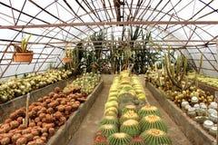 噶伦堡的仙人掌庭院在大吉岭区,印度 免版税库存照片