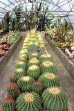 噶伦堡的仙人掌庭院在大吉岭区,印度 免版税图库摄影