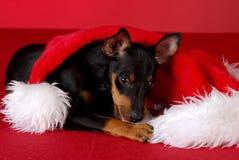 嚼帽子小狗圣诞老人 免版税库存照片