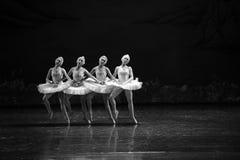 四一点天鹅这天鹅湖边芭蕾天鹅湖 免版税库存照片