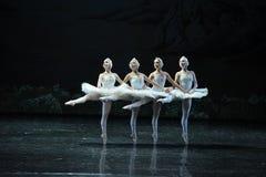 四一点天鹅这天鹅湖边芭蕾天鹅湖 库存照片