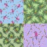 四与五颜六色的鹦鹉的无缝的样式 图库摄影