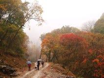 四个人徒步在森林里 免版税库存图片