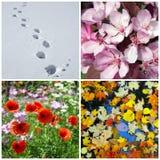 四个季节。冬天,春天,夏天,秋天。 免版税库存图片