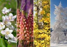 四个季节拼贴画 库存照片