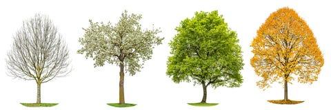 四个季节自然被隔绝的树剪影 免版税图库摄影