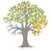 四个季节结构树 库存照片
