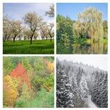 四个季节 图库摄影