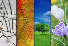四个季节 库存照片