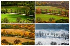 四个季节 库存图片