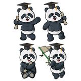 四个熊猫毕业例证 库存例证