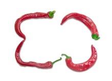 四个红辣椒框架在轻的背景的 免版税库存照片