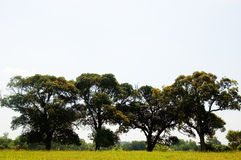 四个结构树 库存照片