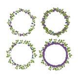 四个装饰的蓝莓圆的框架 免版税库存照片