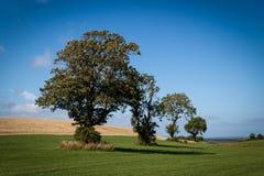 四个结构树 图库摄影