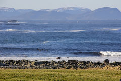 四位冲浪者在冬天 库存照片