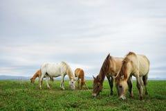 四匹马一起吃草,多云背景 免版税库存照片