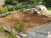 四匹马在小牧场户外在加泰罗尼亚,西班牙 库存图片