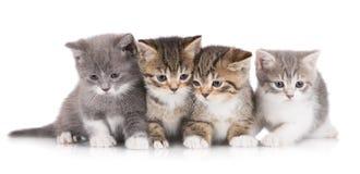 四只可爱的小猫 库存照片