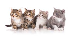 四只可爱的小猫 图库摄影