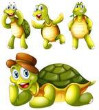 四只嬉戏的乌龟 库存照片
