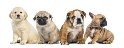 四只小狗坐, 免版税图库摄影
