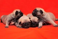 四只小狗 免版税库存图片