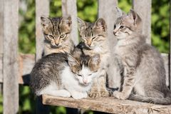 四只小猫坐委员会 免版税库存照片