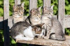 四只小猫坐委员会 免版税库存图片