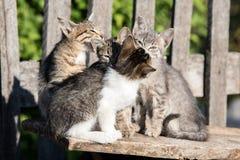 四只小猫坐委员会 免版税图库摄影
