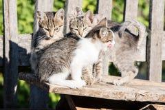四只小猫坐委员会 库存图片