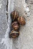 四只小的蜗牛 库存照片