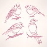 四只小的鸟 皇族释放例证